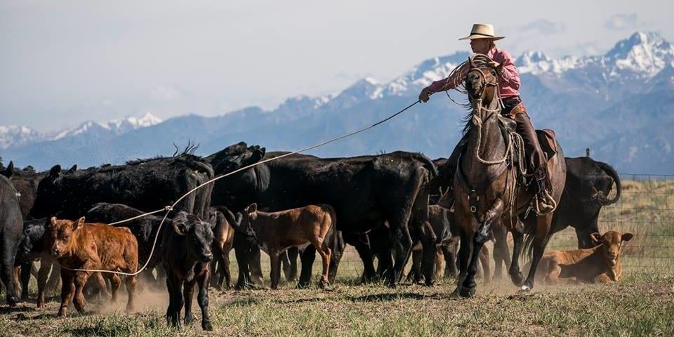 Zapata Ranch Mosca Colorado