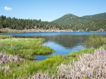 Colorado fishing fly fishing licenses reports for Evergreen lake fishing report