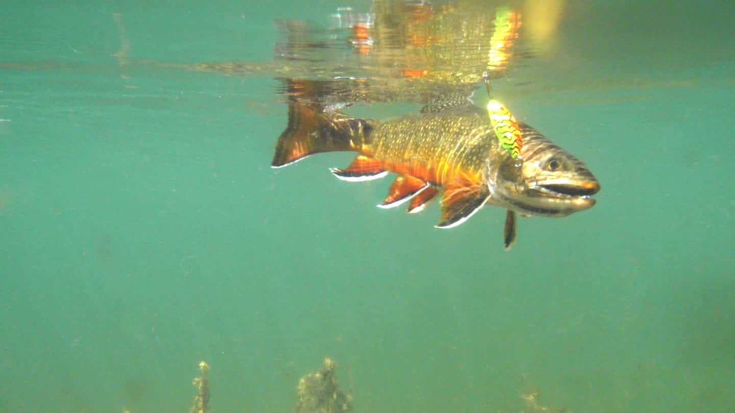 Fishing Brook Trout Artificial Lure