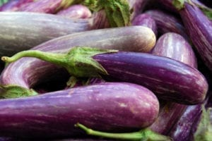 Gardening Eggplant Harvest