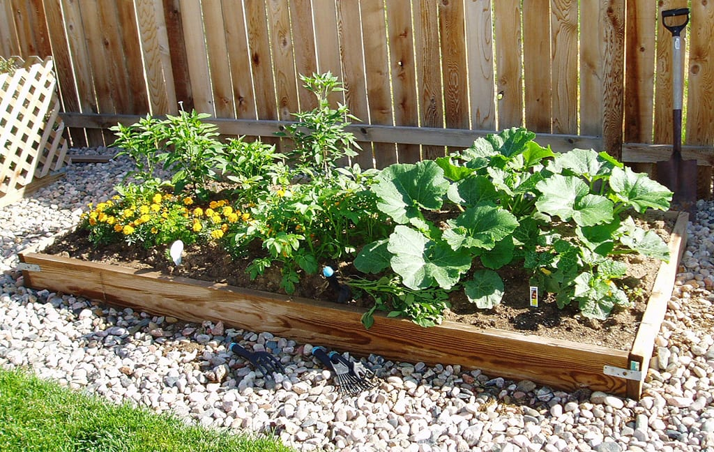 High Altitude Gardening Fort Collins Colorado