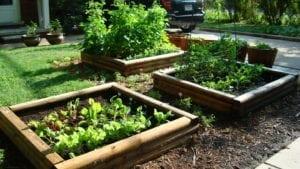 Vegetable Garden Raised Beds