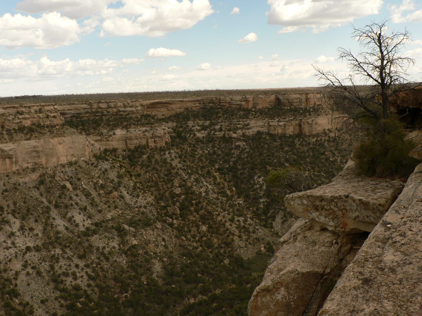Mesa Verde Wilderness
