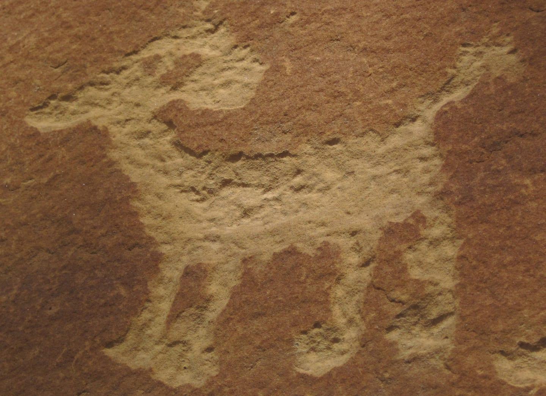 Petroglyph Point Trail Anasazi Indian Petroglyph Mesa Verde
