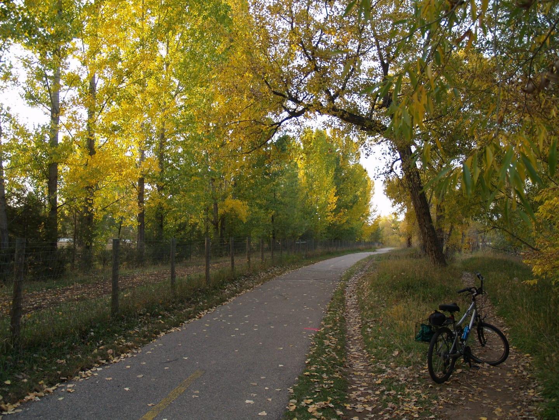 Poudre River Trail Autumn Aspens