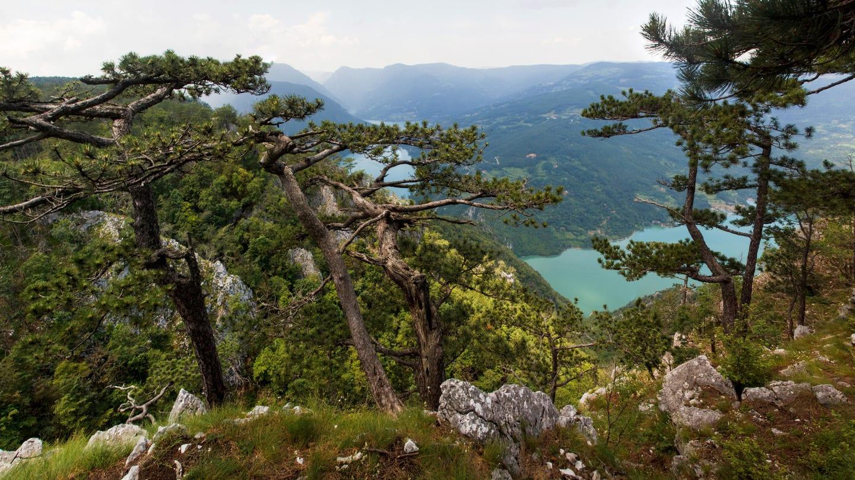 Tara National Park Serbia Banjska Stena