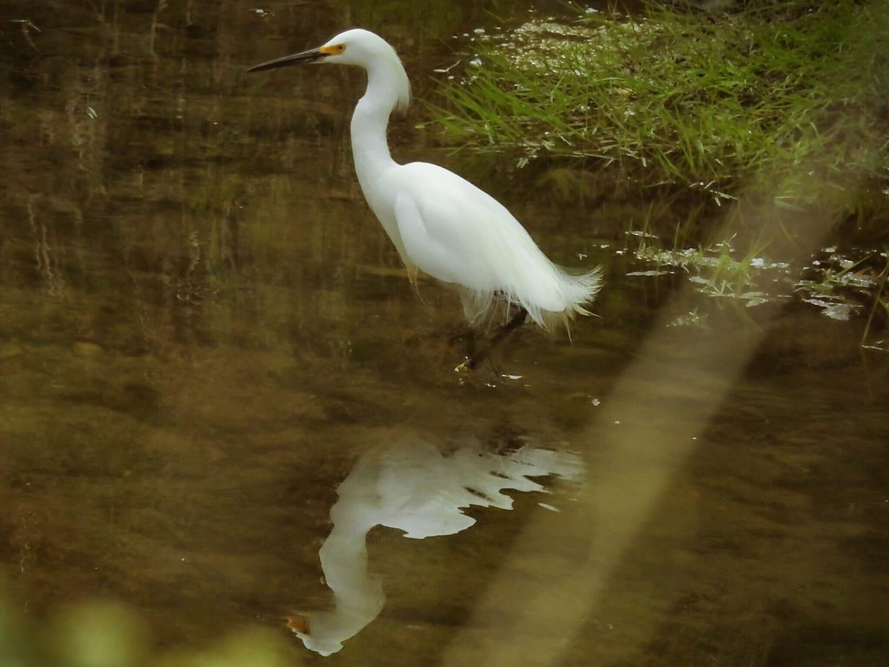 Two Ponds Trail Arvada Waterfowl