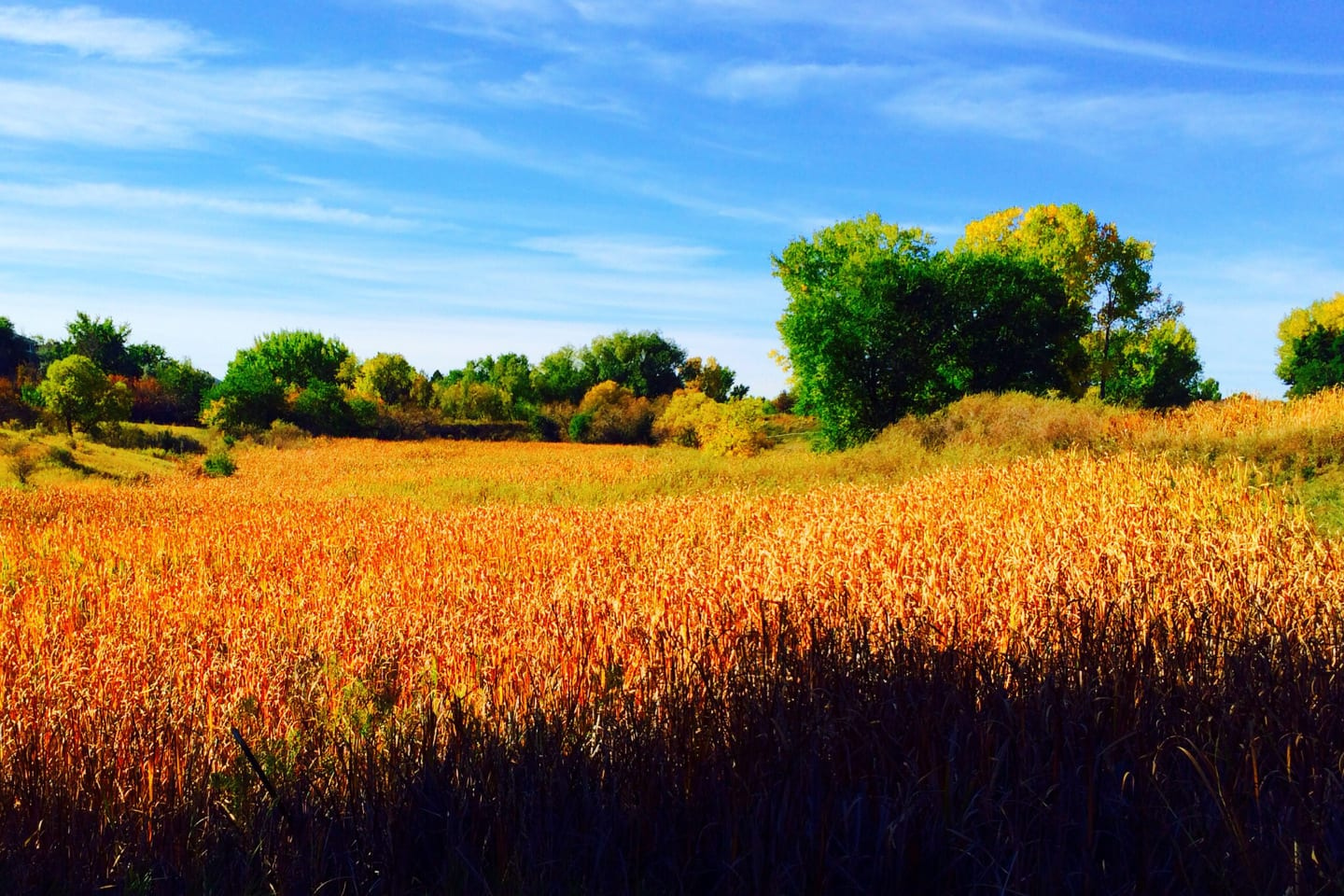 Two Ponds Trail Arvada Autumn Meadows