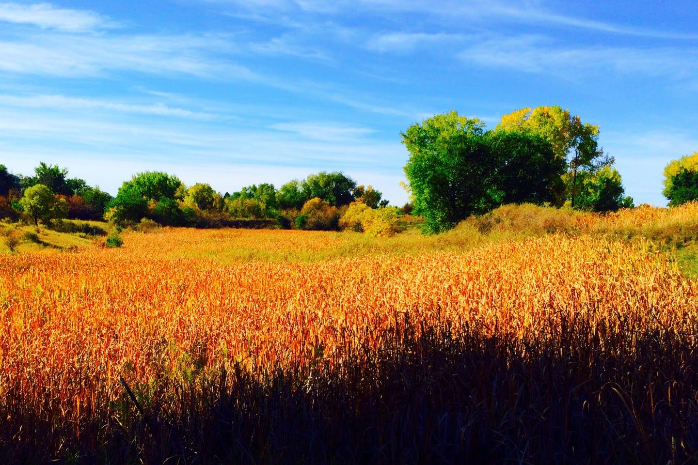 Two Ponds Trail Arvada Autumn Meadows
