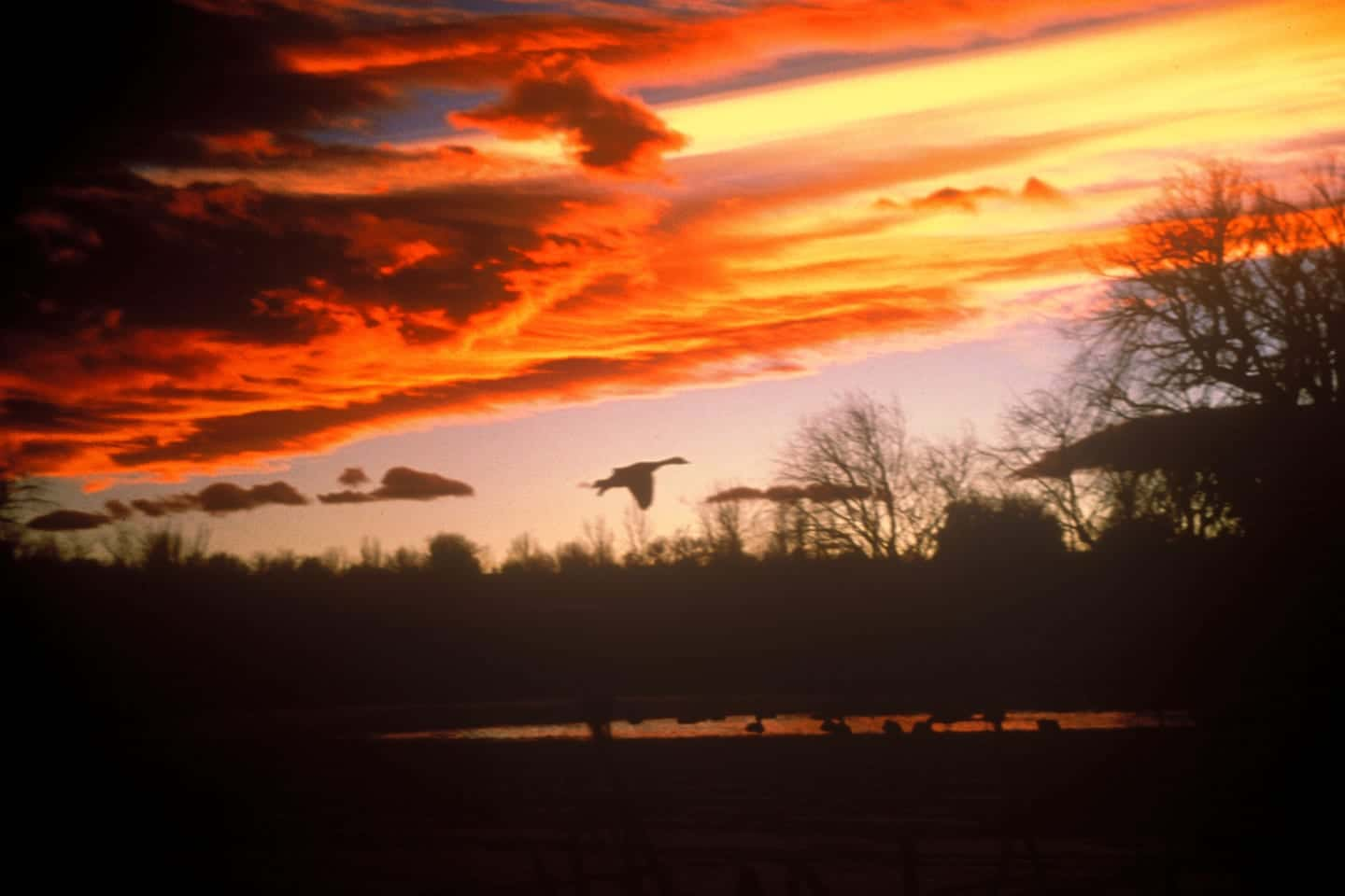 Two Ponds Trail Arvada Sunset Waterfowl