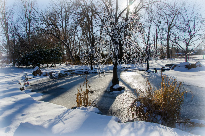 Hudson Gardens Snow Fake Icicle Tree Littleton