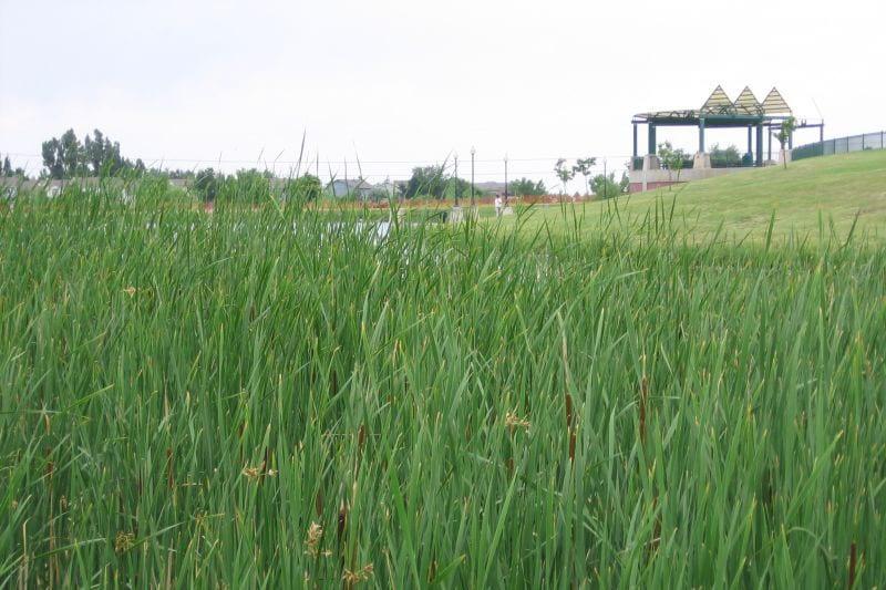 Westminster City Park Grass