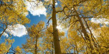 Fall Colors Boreas Pass Yellow Aspens Sunshine