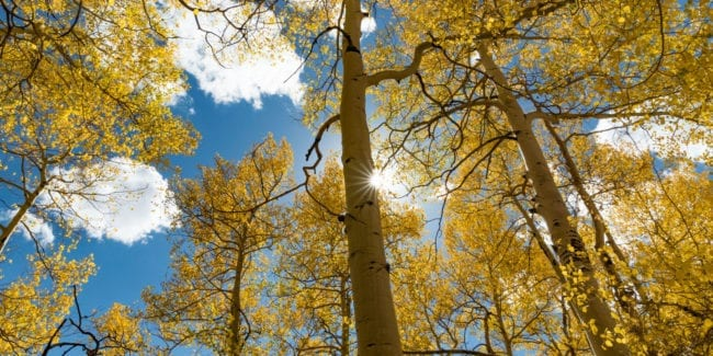 Fall Colors Boreas Pass Yellow Aspens Sunshine
