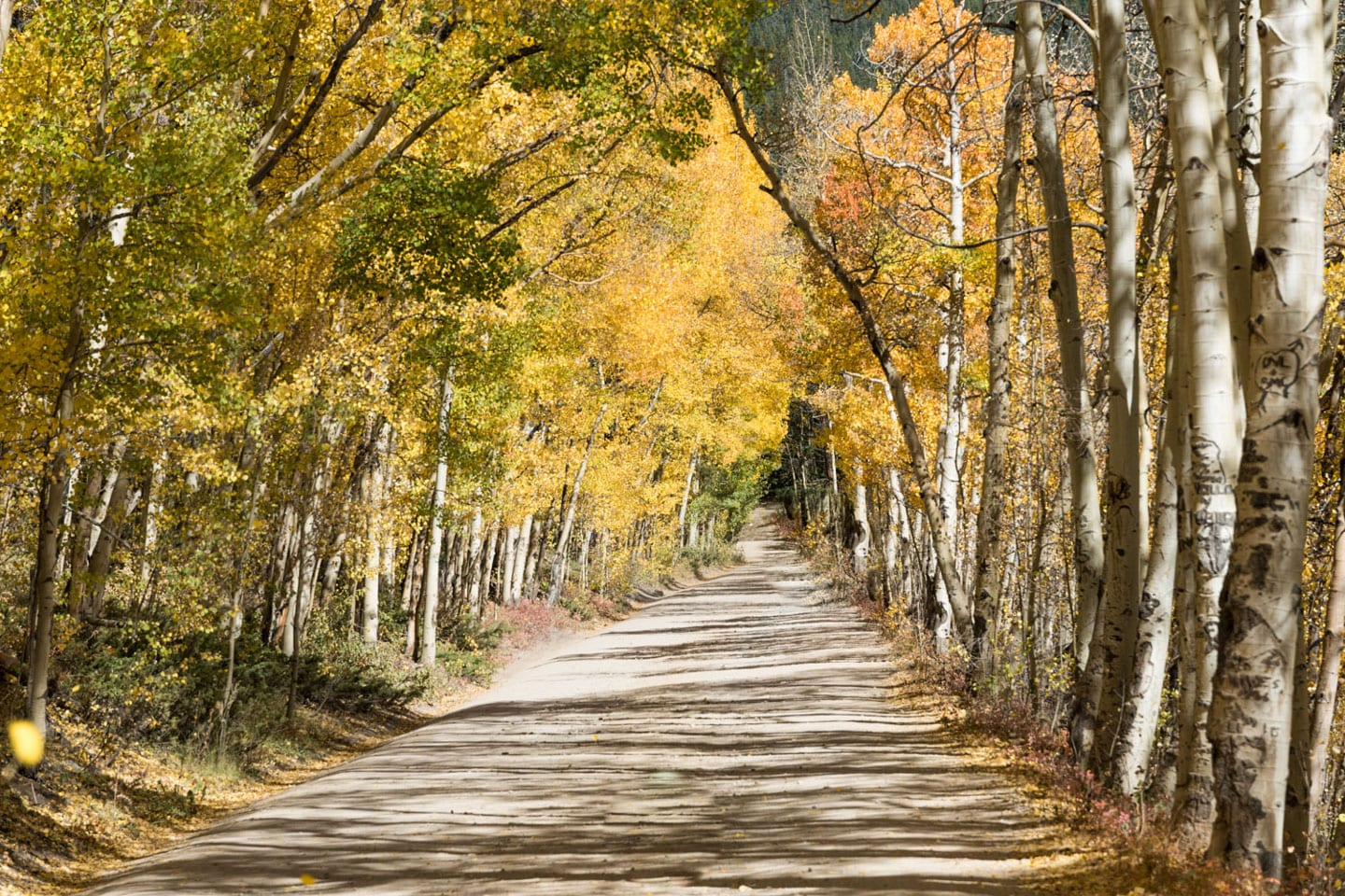 Fall Colors Boreas Pass Autumn Road