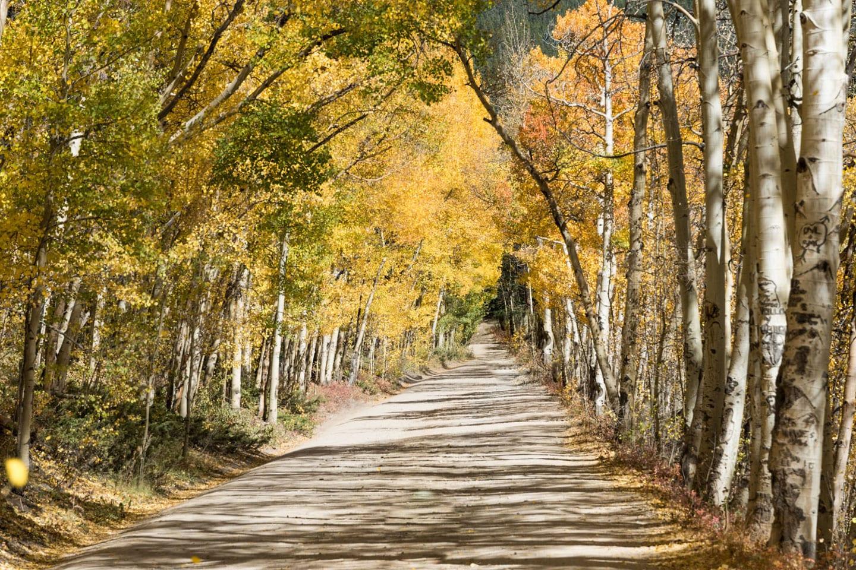 Fall Colors Boreas Pass Autumn Road