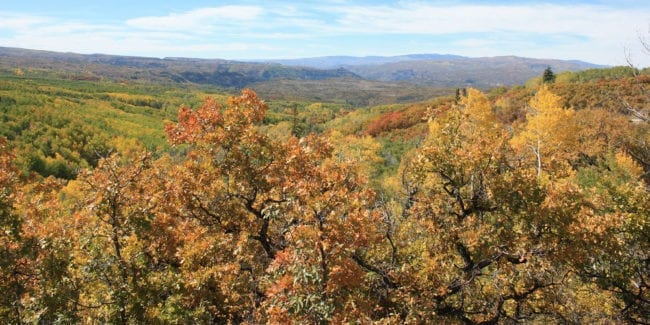 Fall Colors Kebler Pass Colorado