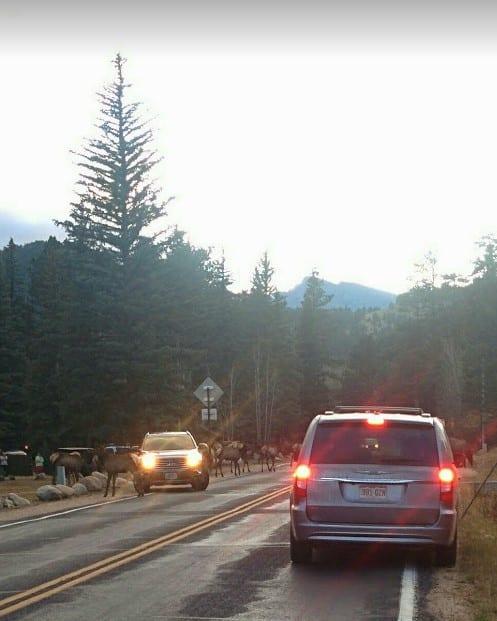 Visit Colorado Fall Elk Wildlife Roads