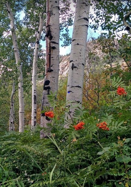 Visit Colorado Spring Flowers