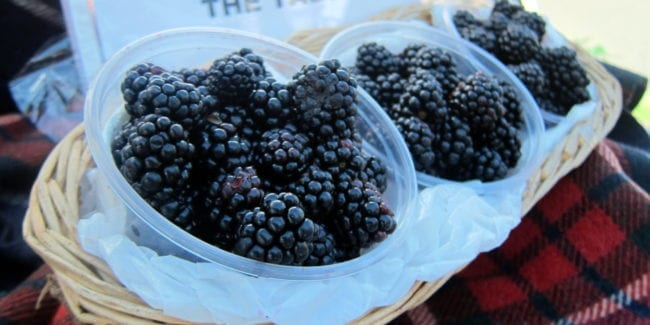 Best Denver Farmers Markets Old South Pearl Blackberries