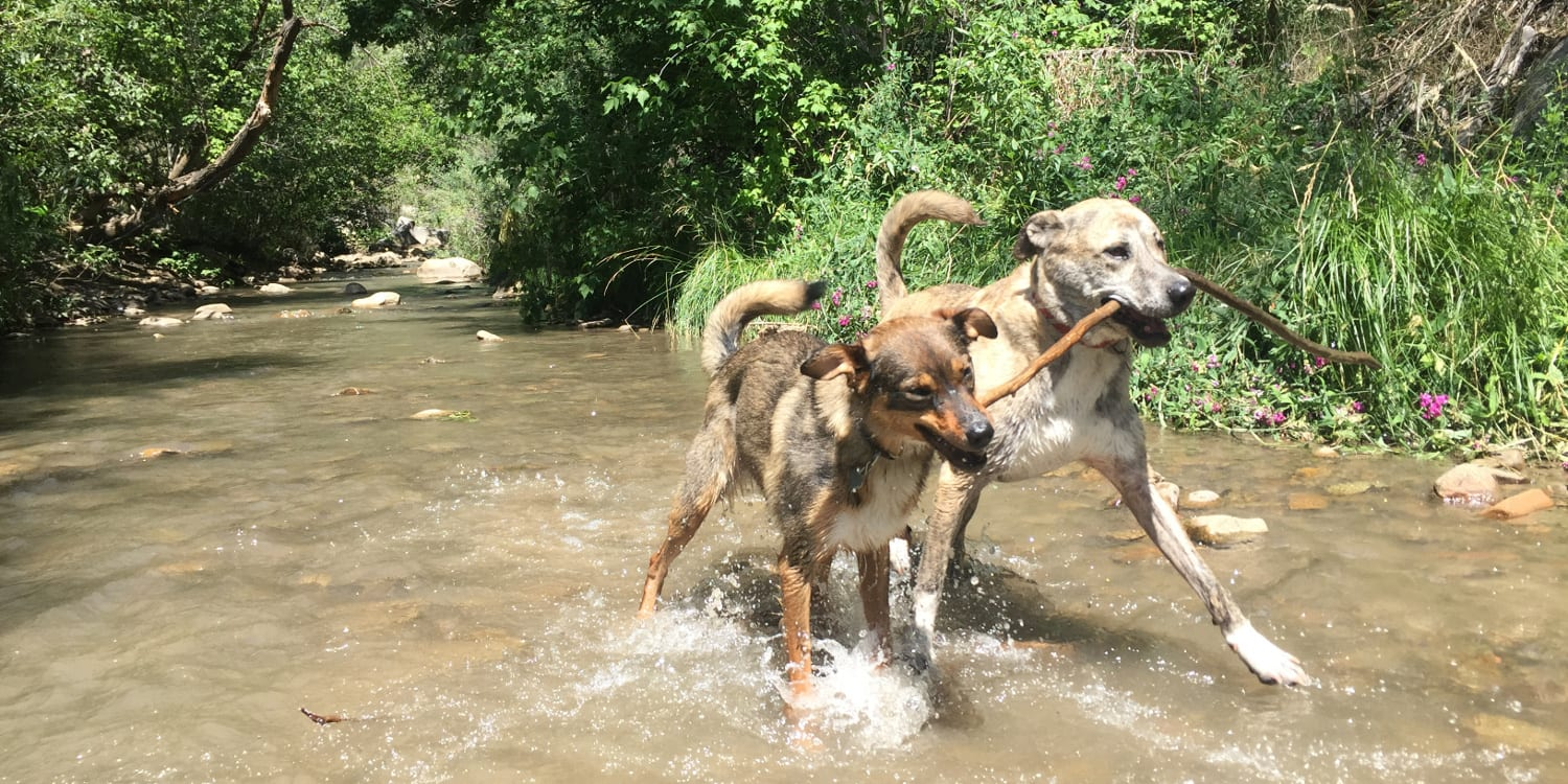Best Instagrams Uncover Colorado Durango Dogs River