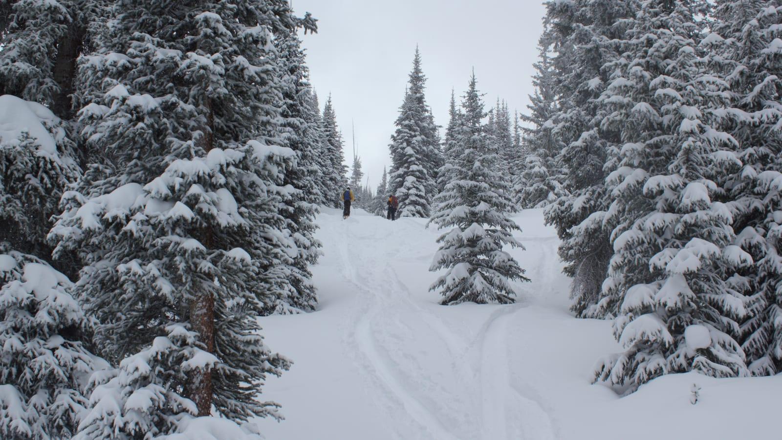 Colorado Backcountry Tree Skiing Peter Estin Hut Basalt