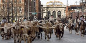 Winter Colorado Events National Western Stock Show Parade