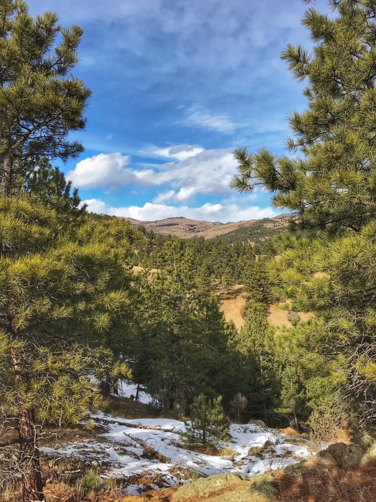 image of Canyon Loop trail near Boulder, CO