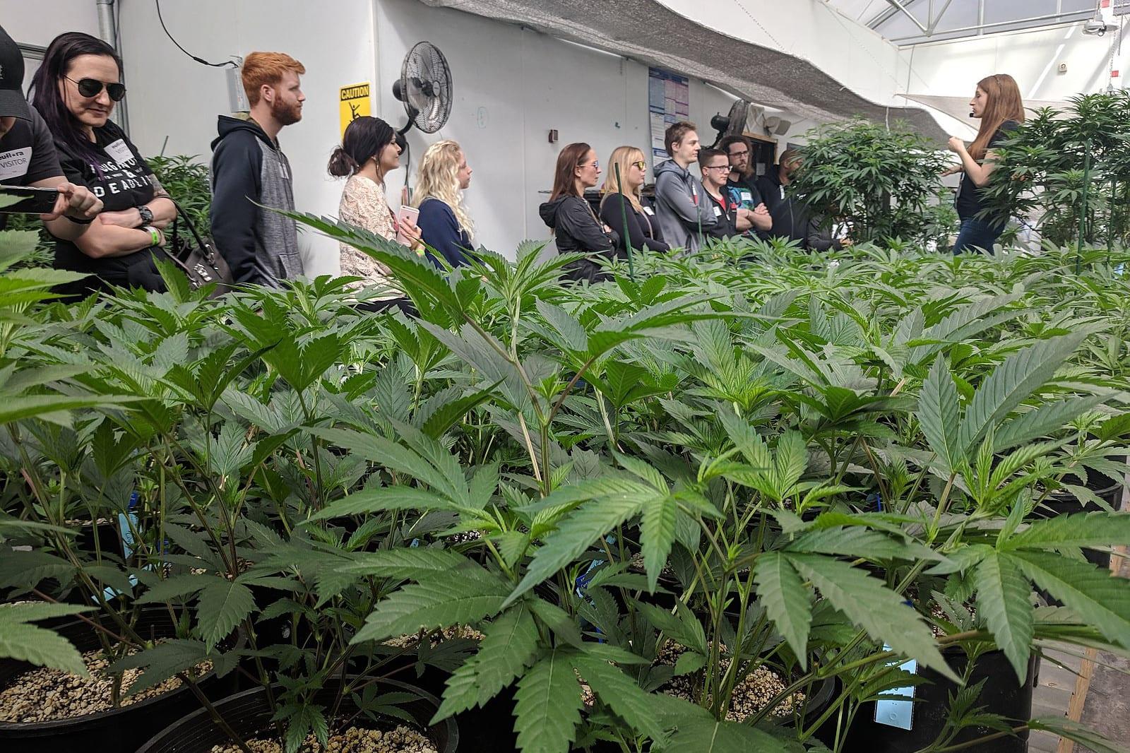 Colorado Cannabis Tourism Denver Pot Tour