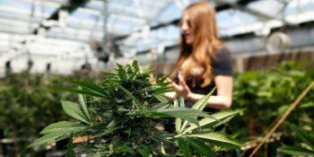Cannabis Tourism Denver Colorado My 420 Tour Guide