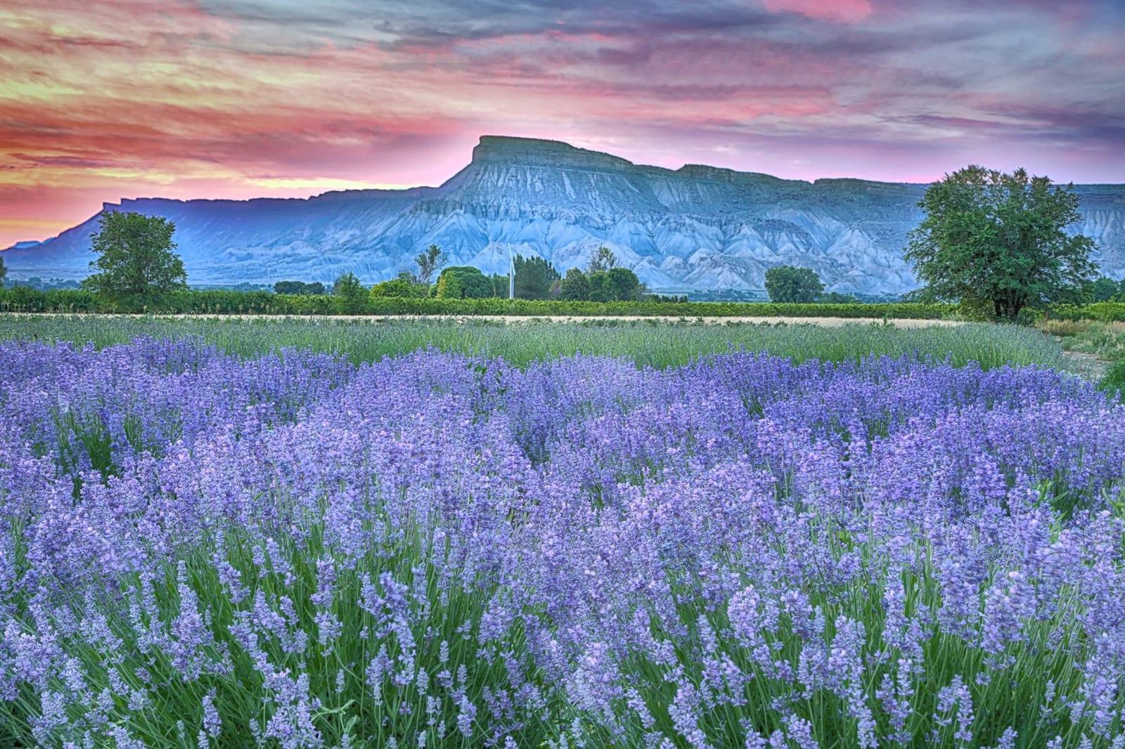 Colorado Educational Field Trips Sage Creations Organic Farm