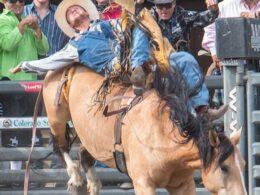 Colorado State Fair Rodeo Bull Riding