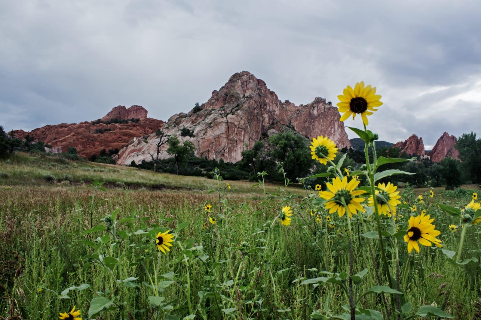 Garden of the Gods Colorado Springs Sunflowers