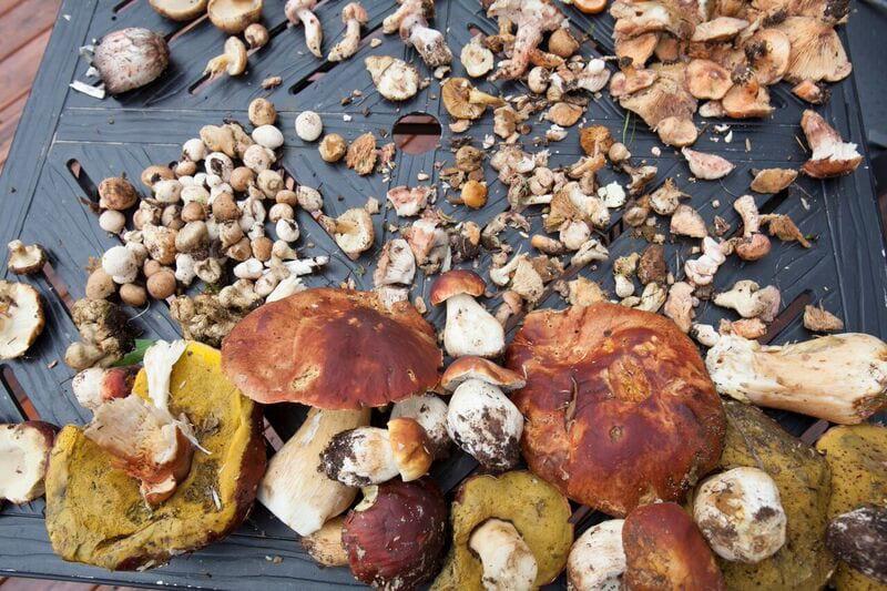 Mushroom and Wine Festival Assortment Wild Shrooms Purgatory Resort Durango