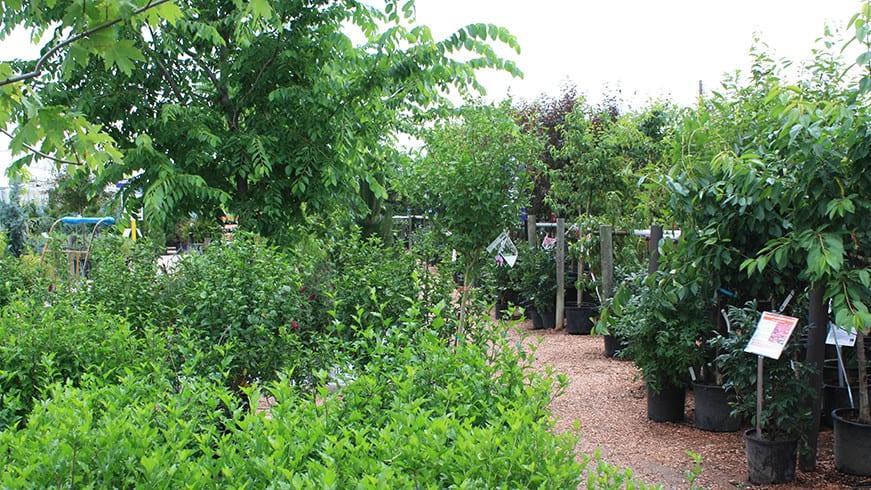 Tagawa Gardens Home Nursery Trees Shrubs