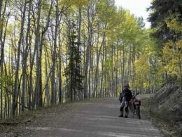 Waunita Pass Colorado