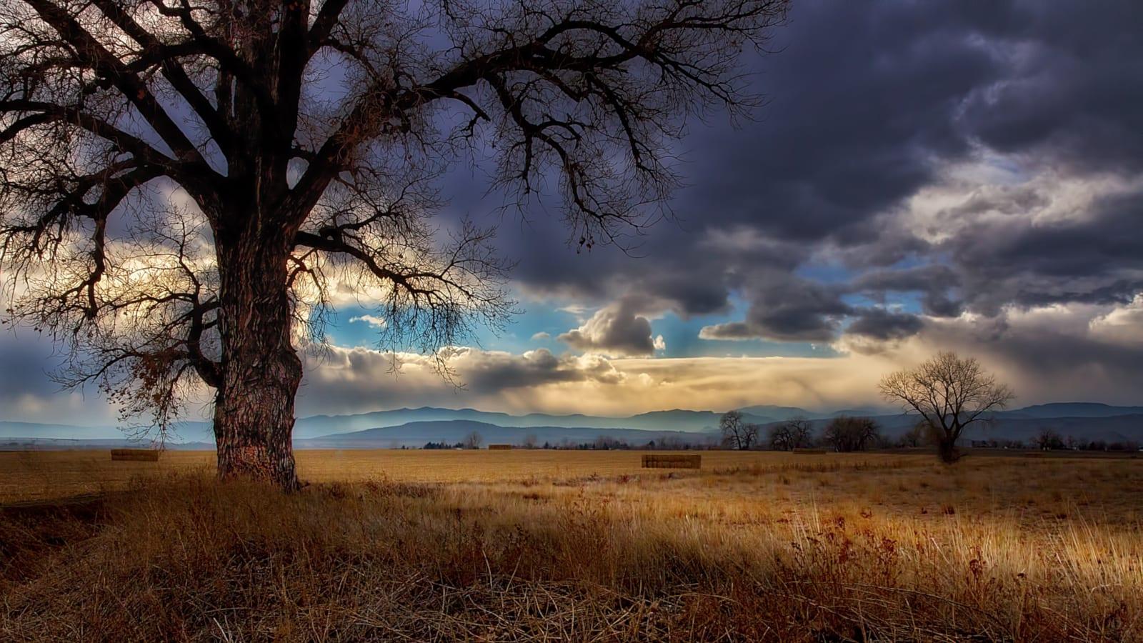 Berthoud Colorado Tree Clouds