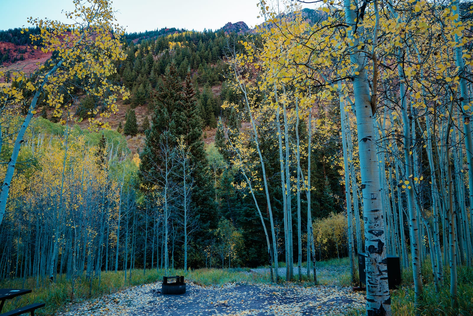 Camping near Aspen CO Silver Bell Campground Yellow Aspens