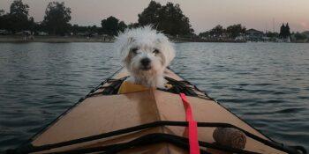 Kayak With Your Dog California Kayaking