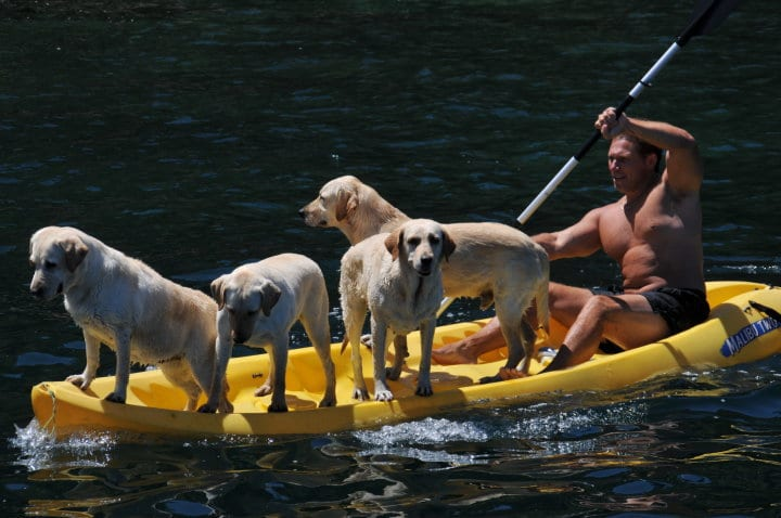 Kayak With Your Dog 4 Labs Mexico