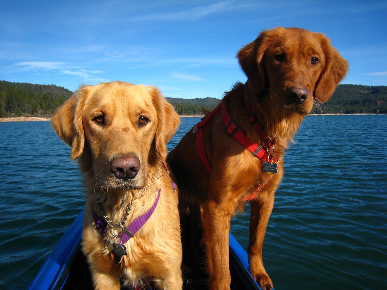 Kayak With Your Dog 2 Labs Christmas Day Nevada, California