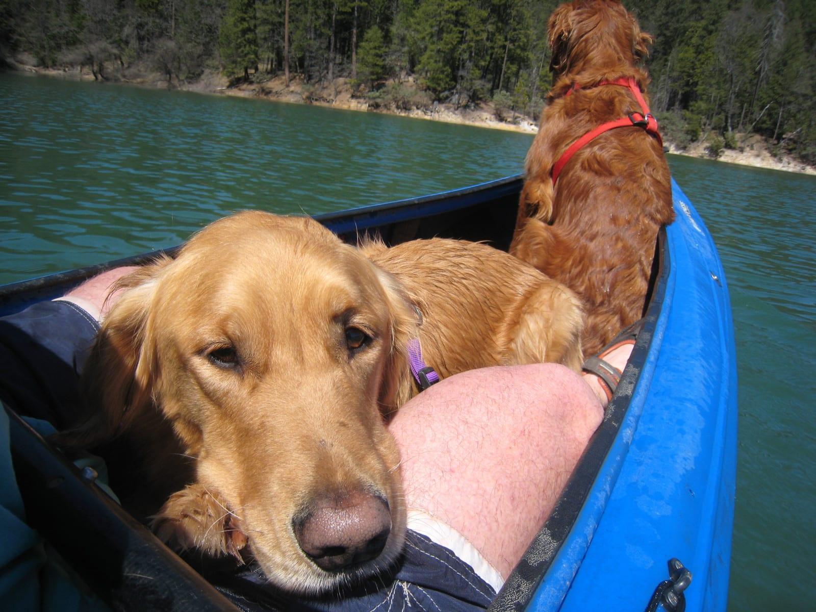 Kayak With Your Dog 2 Labs Kayak Lap Dog