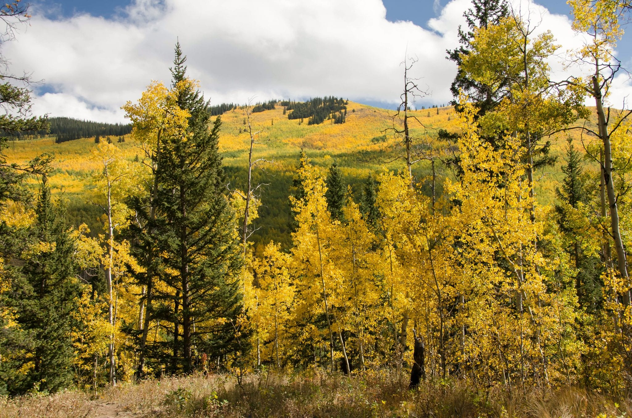 Kenosha Pass CO Autumn Colors
