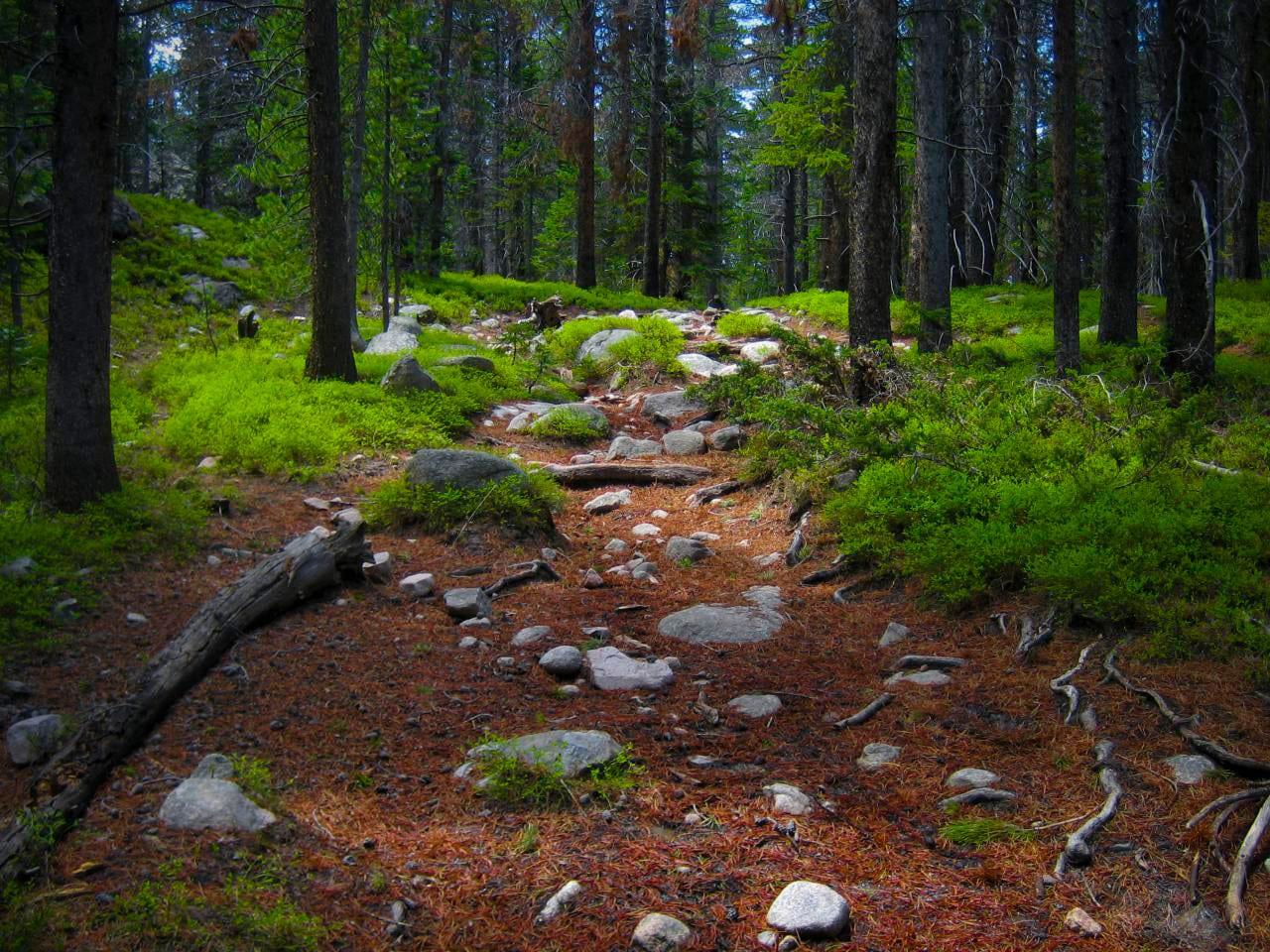 Rawah Wilderness Forest Colorado