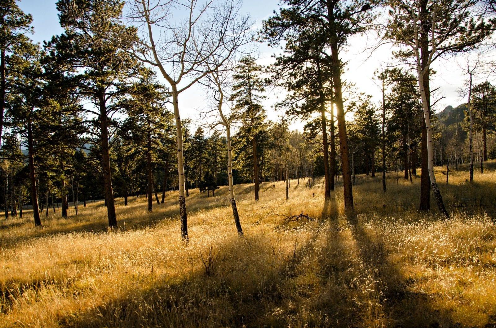 Sunset Hike Staunton State Park Conifer Colorado