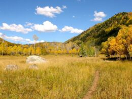 Swamp Park Trail Single Track Steamboat Springs Autumn Colors