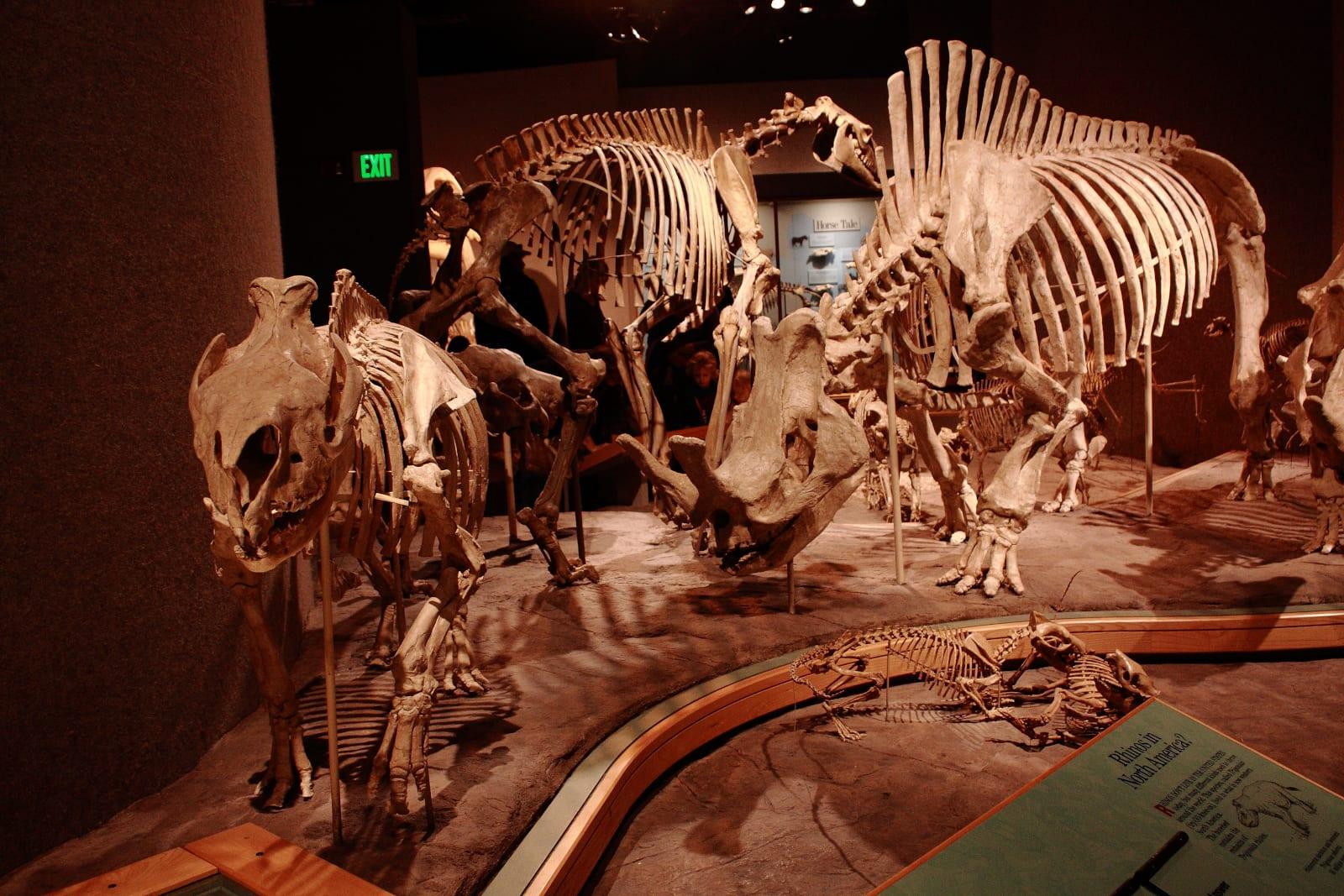 Denver Museum of Nature & Science Dinosaur Bones