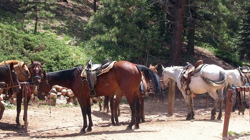 Old Stage Riding Stables Colorado Springs