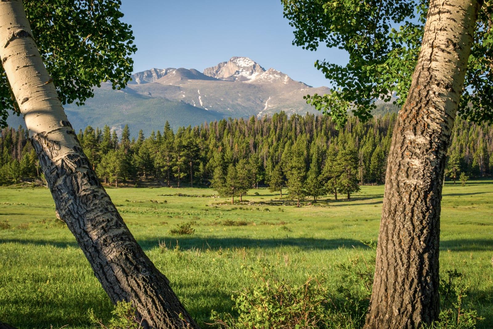 Rocky Mountain National Park Wilderness Longs Peak Trees