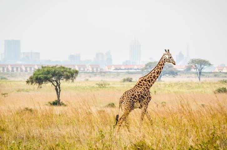 image of Nairobi Kenya